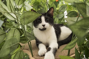 On2 Pets Natural Home Cat Tree