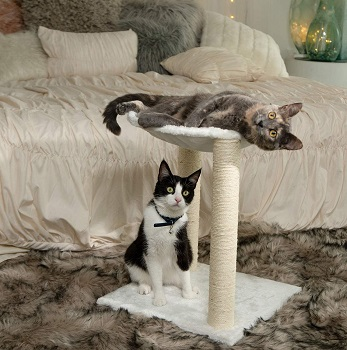 Paws & Pals Scratching Post review