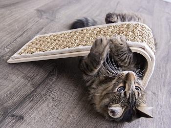 Petlinks Floor Cat Scratcher