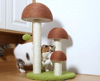 PetnPurr Cat Tree Mushroom Review