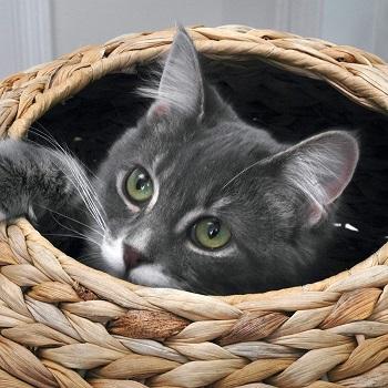 Sauder Natural Sphere Cat Tree 774747