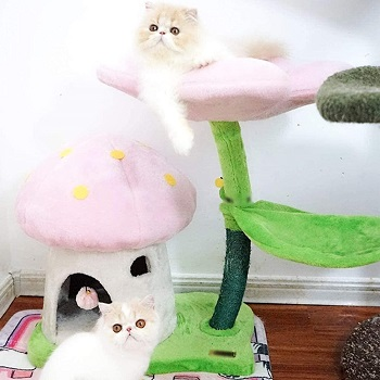 TGHY Mushroom Climbing Tower For Cats Review