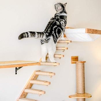 fukumaru cat stairs