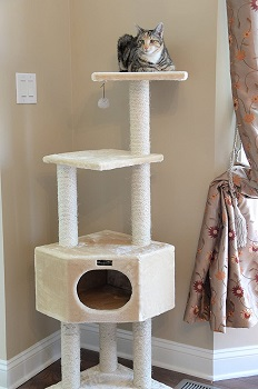 Armarkat One Large Cat Tree Review