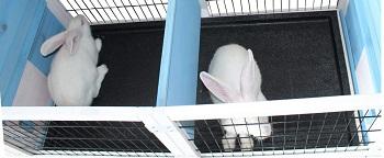 BEST WOODEN Rockever Cute Bunny House
