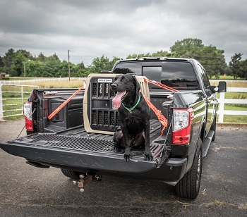 BEST HEAVY-DUTY HARD PLASTIC DOG CRATE