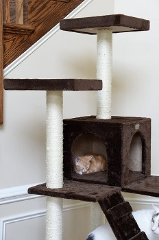 GleePet GP78700623 Cat Tower With Ramp Review
