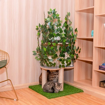 Scurrty Cat Tree With Leaves Review