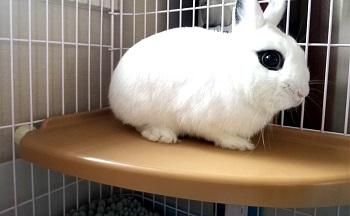 Alfie Rabbit Shelf