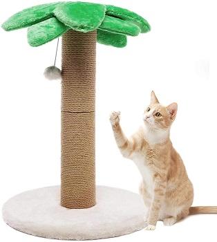 BEST CAT PALM INDOOR