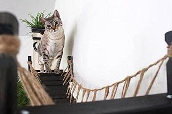 BEST CAT WALL JUNGLE GYM BRIDGE