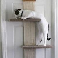 BEST DOOR CAT CLIMBING STRUCTURE summary