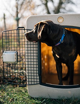 BEST EXTRA LARGE HUNTING DOG CAGE