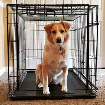 BEST FOLDING DOG CRATE FOR SLEEPING