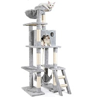 BEST FOR LARGE CATS ACTIVITY TREE summary