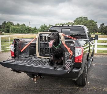 BEST FOR TRAVEL GUN DOG CRATE