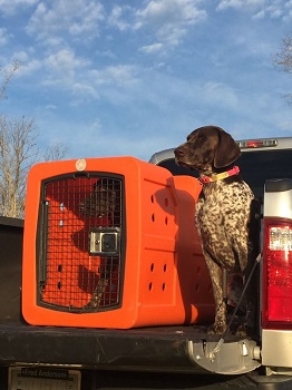 BEST FOR TRAVEL HUGE PLASTIC DOG CRATE (2)
