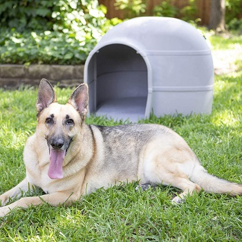 BEST LARGE DOG HOUSE CRATE