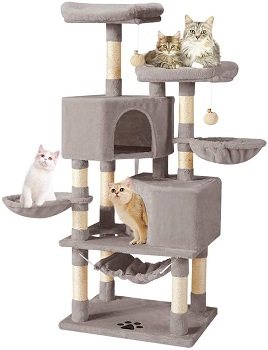 BEST MULTI-CAT CONDO WITH HAMMOCK