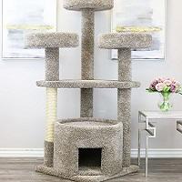 BEST OF BEST CAT CONDO HOUSE summary