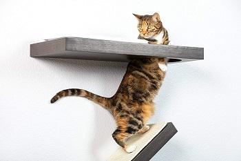 BEST SET CAT CLIMBING SHELVES