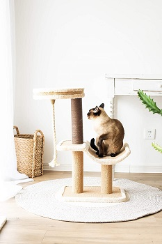 BEST SMALL CAT TREE FOR ADULT CATS