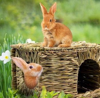 Bwogue Rabbit House