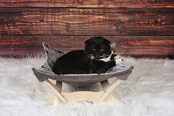 Paws One Natural Hammock For Cats