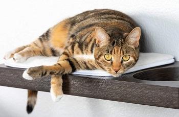 Petfusion 3-Piece Set Stylish Cat Shelves