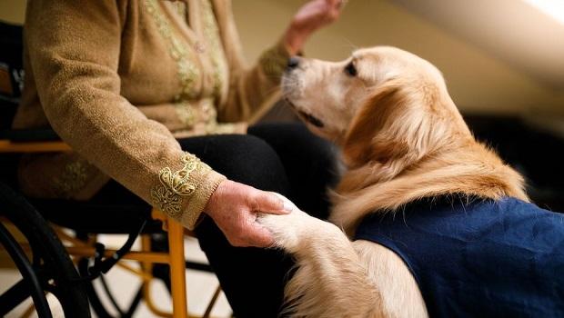 Service Dogs Regulate Or Prevent Attacks