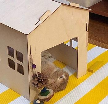 Tokihut Rabbit House