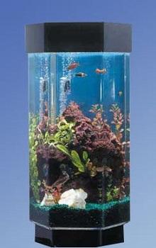 Advance Aqua Tanks Hexagon Aquarium