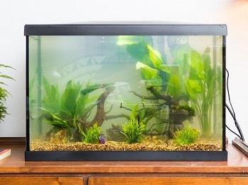 Aqueon 10 Gal Black Aquarium