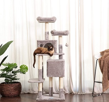 BEST FOR LARGE CATS 60 INCH TREE