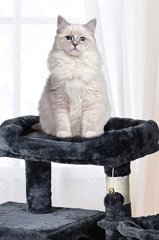 BEST LARGE CAT TREE BASKET
