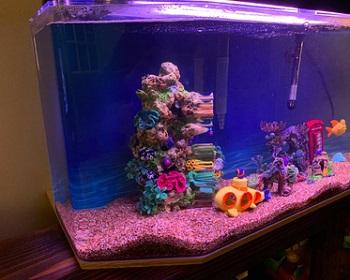 BEST MODERN 10 GALLON TANK FISH COMBO