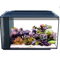 BEST OF BEST 13 GALLON FISH TANK summary
