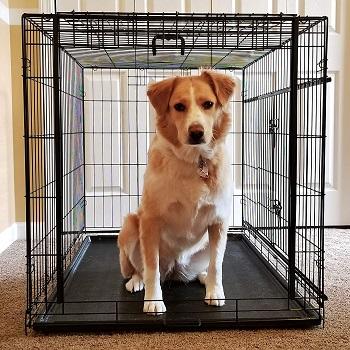 BEST OF BEST BLACK DOG CAGE