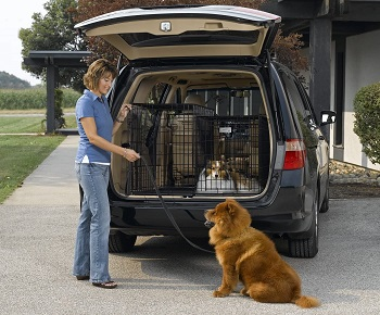 BEST OF BEST COLLAPSIBLE DOG CRATE