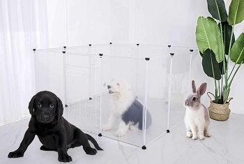 BEST PLASTIC CLEAR DOG CRATE