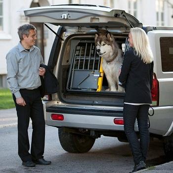 BEST TRAVEL DOG CAGE FOR HUSKY