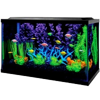 BEST WITH FILTER 10 GALLON ALL IN ONE AQUARIUM summary