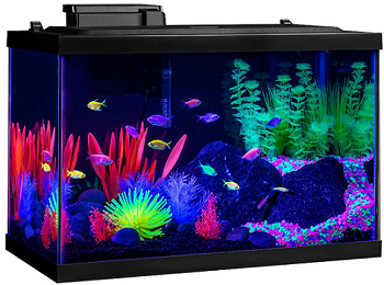 BEST WITH FILTER 10 GALLON ALL IN ONE AQUARIUM