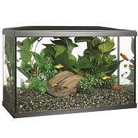 BEST WITH FILTER 10 GALLON TANK FISH COMBO summary