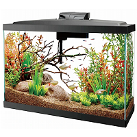 BEST WITH FILTER 13 GALLON FISH TANK summary