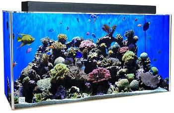 Clear-For-Life Rectangle Aquarium
