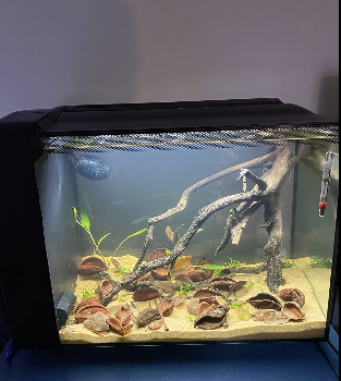 Hagen Fluval Aquarium Kit