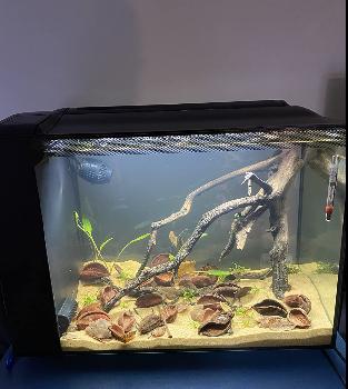 Hagen Fluval Aquarium Kit