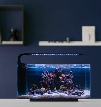 JBJ Rimless Desktop Fish Tank