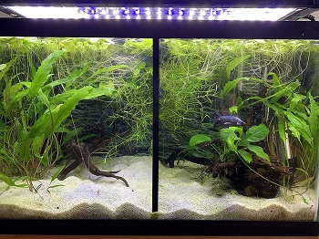 Lifewithpets Aquarium Tank Divider